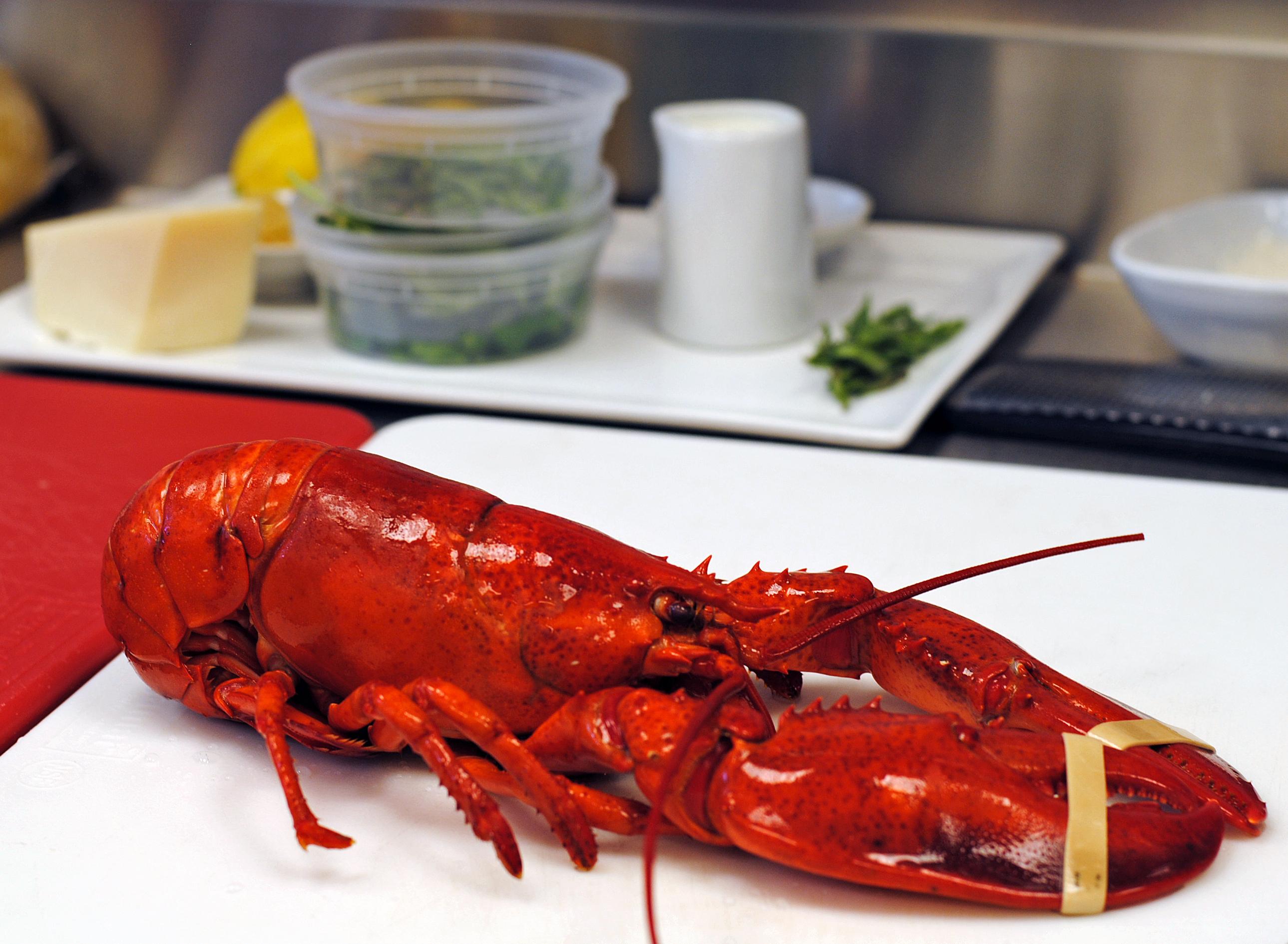 Lobster Fettucini 2