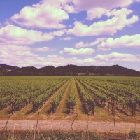 West Coast Adventure: Napa